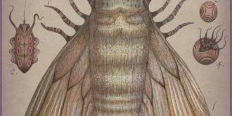Cephalopodoptera by Vladimir Stankovic