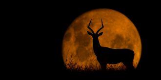 Amazing Wildlife Silhouettes by Mario Moreno