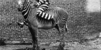 Strange But Cute Vintage Animal Photos