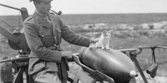 Powerful Photos of Animals at War