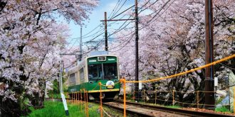 Japan's Sakura Season in Pictures