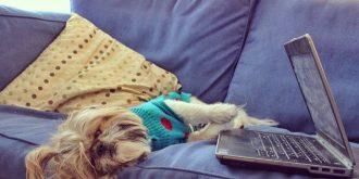 Adventures of a Cute Shihtzu Dog